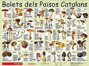 Setas de Catalunya